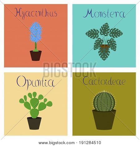 assembly of flat Illustrations nature Hyacinthus Monstera Opuntia Cactoideae