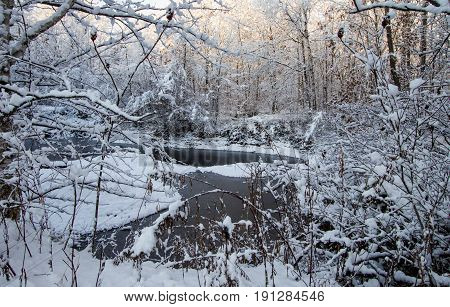 Winter Forest Landscape Scene. Fresh fallen snow in a wilderness forest on the shores of a small pond in Michigan.