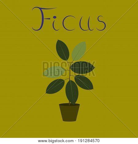 flat illustration on stylish background plant Ficus