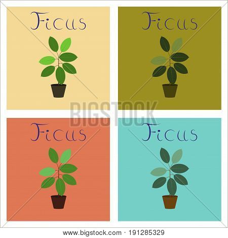 assembly of flat Illustrations nature plant Ficus