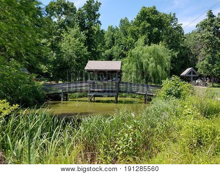 murky pond with green vegetation and wooden bridge