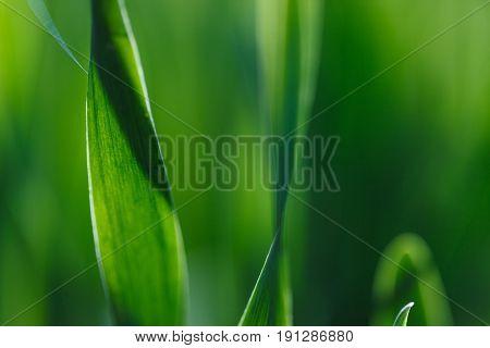 The fresh green grass in sunshine. Shallow Dof