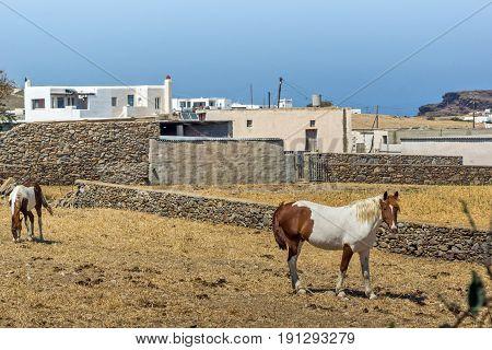 Rural landscape in island of Mykonos, Cyclades, Greece