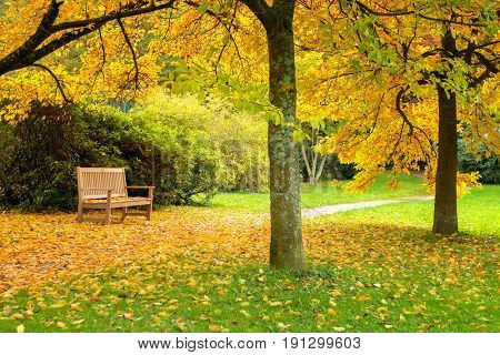benches in a beautiful autumn park with fallen leaves