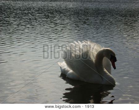 Swan 945