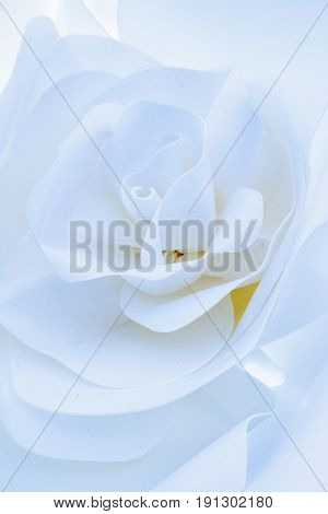 Decorative flower from a paper of white color