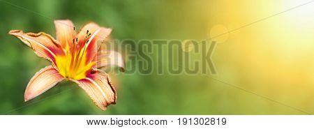 Banner idea of a beautiful lily flower