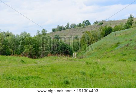 Mountain landscape With trees steep slopes and an incredibly beautiful sky pastel