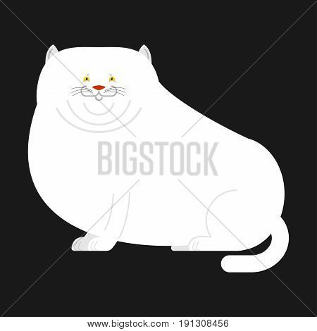 Fat White Cat Isolated. Big Thick Pet Home