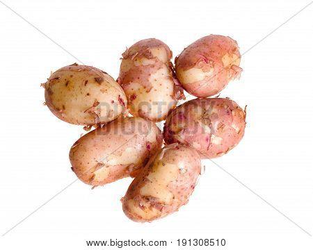 new fresh organic potatoes isolated on white