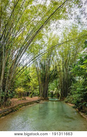 Natural oasis pool creek in tropical bamboo jungle in North Trinidad and Tobago