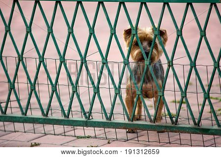 The  little dog  is behind the fence.