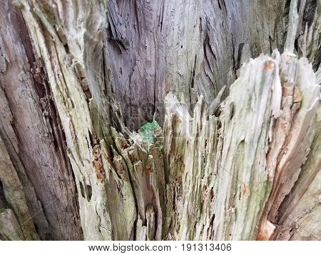 old decomposing and rotted and broken brown tree trunk