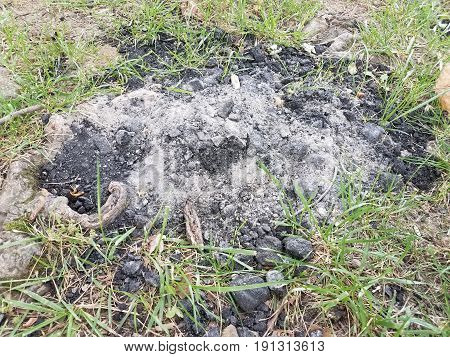 used black charcoal disposed of on green grass
