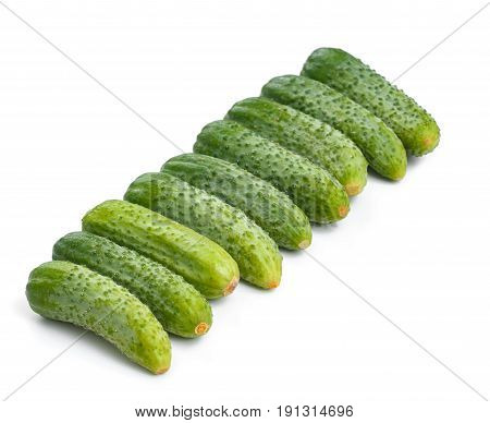 fresh cucumbers for salad and preservation isolated on white background