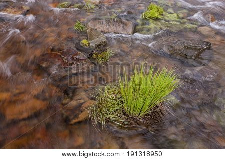 The water of Canyon Creek rushes around this clump of grass.