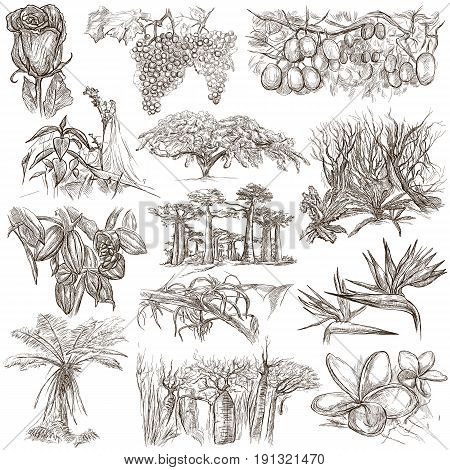 FLOWERS and Trees around the World. Collection of an hand drawn illustrations. Freehand sketching. Line art. Drawings on white background isolated.