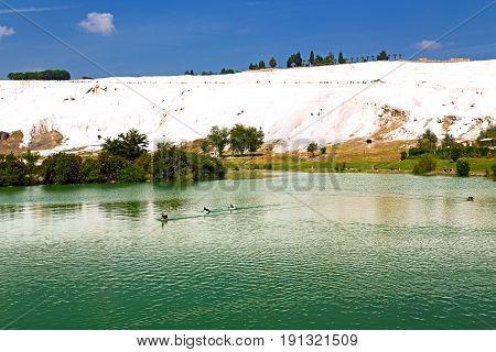 Tree    Pamukkale  Bath And Travertine Water