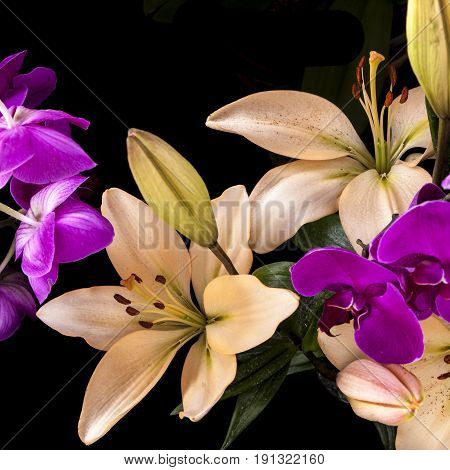 Close up of orchids and lilies. A low key image of yellow lilies and purple orchids shot against a black background.