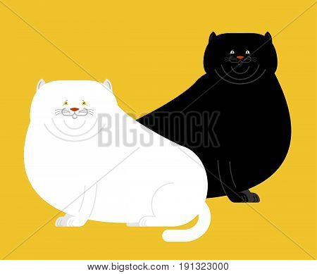 Fat White And Black Cat Isolated. Big Thick Pet Home