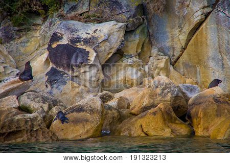 Beautiful sea lions over the rocks in Abel Tasman National Park, located in South Island in New Zealand.