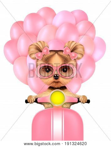 Lovely puppy sitting on motorbike with balloons and sunglasses , isolated on white. Love and friendship concept. Realistic 3D illustration