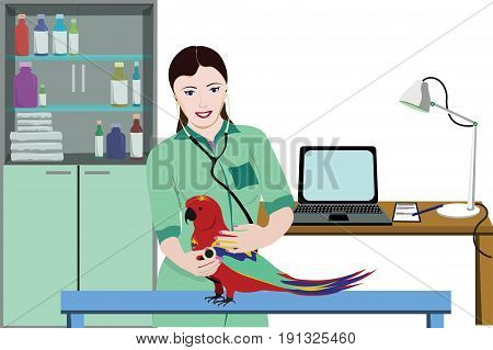 Veterinary clinic medical template with smiling female doctor examining parrot using stethoscope vector illustration