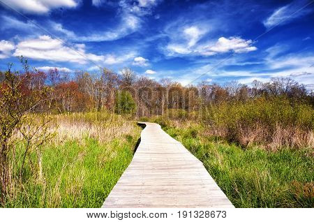 A boardwalk through a wetland ecosystem at white memorial conservation center in Litchfield Connecticut on a beautiful spring day.