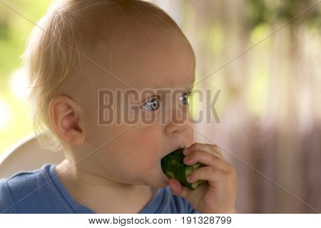 Open-eyed Blondy Toddler Eating A Cucumber And Kees Calm