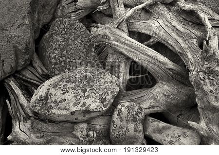 An abstract nature B&W image of lichen covered rocks and old tree roots.