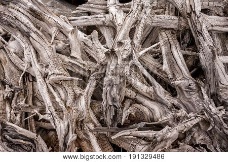 A close up B&W abstract of tree branches mangled together.