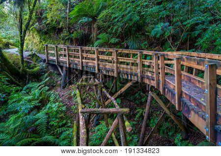 Bridge inside of dense temperate rainforest with fern trees in south island, in New Zealand.