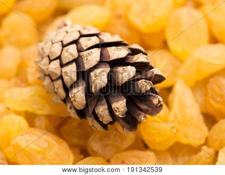 pine cones on a yellow raisins . A photo