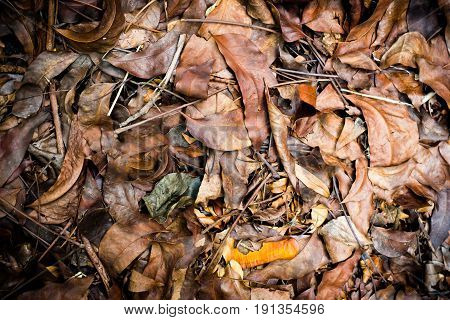 The Dead Leaves Shot Ideal For Backgrounds And Textures