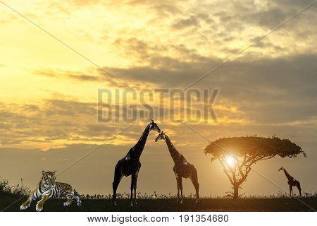 Flock of animals in safari at sunset