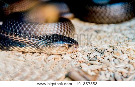 snake and serpent long limbless reptile animal