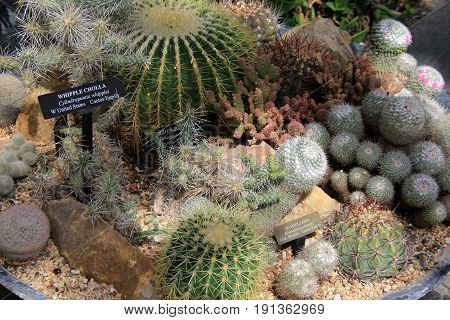 Pretty image of Zen garden, with several different cacti tucked into large section of landscaped area.