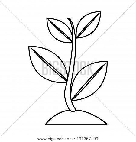 plant sapling growing natural botanical image vector illustration