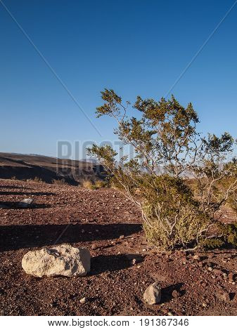 Mountains, Dry Tree And Desert Landscape