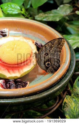 Large pottery bowl with water and food for butterflies to land when thirsty.