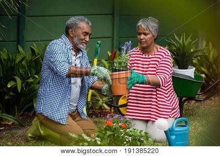 Senior couple planting together while kneeling on field in backyard