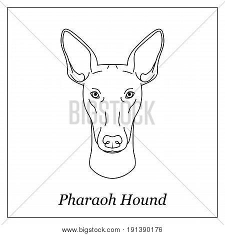 Isolated black outline head of pharaoh hound on white background. Line cartoon breed dog portrait
