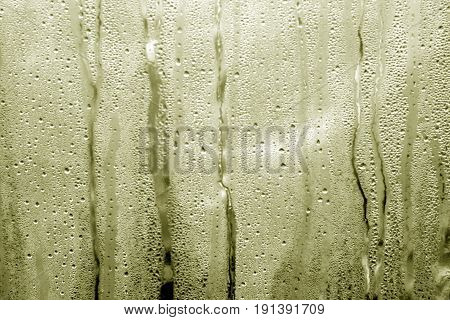 Yellow Toned Condensation Drops On Pvc Greenhouse