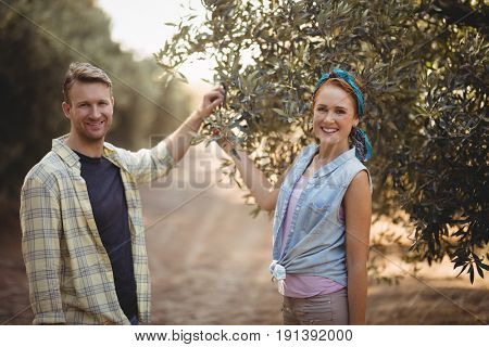 Portrait of smiling young couple holding olive tree while standing at farm