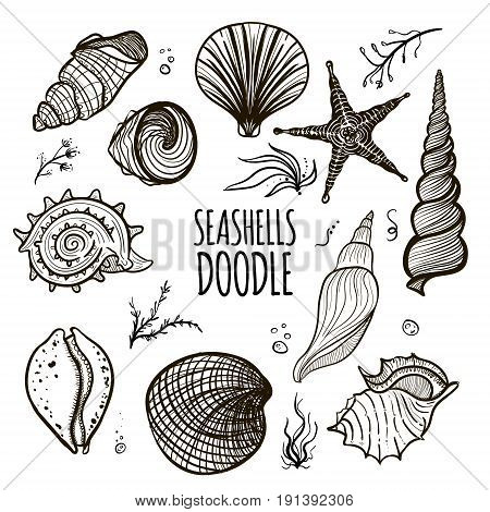 Set of seashells on white background. Hand drawn doodle seashells starfish seaweed and coral. Creative seashells of different type.