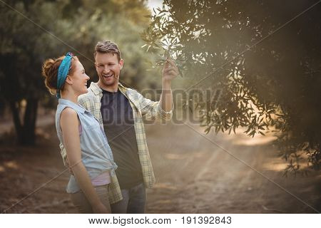 Cheerful young couple standing by olive tree at farm