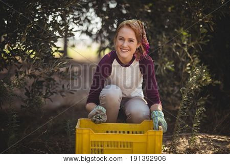 Portrait of cheerful young woman collecting olives in crate at farm