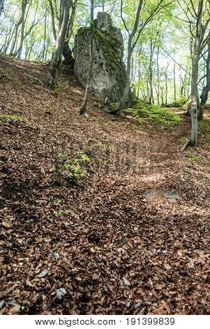 spring mountain forest with isolated rock formation and fallen leaves on the ground near Zadny Sip hill in Velka Fatra mountains in Slovakia