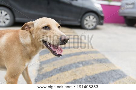 Close up portrait of a stray dog