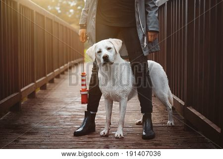 young labrador retriever dog puppy sits between the legs of a young girl - dog school on bridge